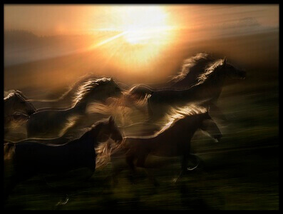 Art print titled Morning  Gallop by the artist milan malovrh
