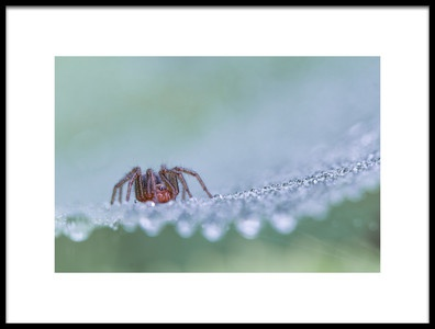 Art print titled Morning Dew by the artist Frank Dalemans