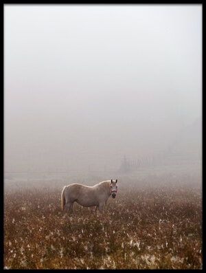 Buy this art print titled Morning Fog by the artist sorin tanase
