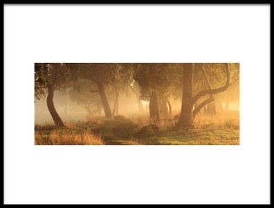 Art print titled Morning Mist by the artist Garth Smith