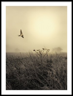 Art print titled Morning Mood by the artist Kent Mathiesen