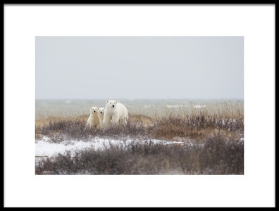 Buy this art print titled Mother Amp Cubs at the Seaside by the artist Marco Pozzi