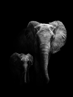 Buy this art print titled Mother and Child by the artist WildPhotoArt