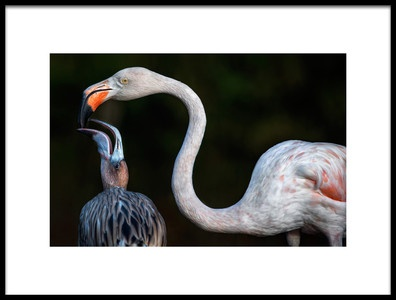 Art print titled Mother Flamingo With Chick by the artist Xavier Ortega