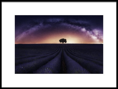 Art print titled My Lavander by the artist Jorge Ruiz Dueso