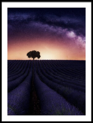 Buy this art print titled My Lavander by the artist Jorge Ruiz Dueso