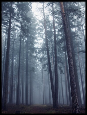 Buy this art print titled Mysterious Foggy Forest by the artist David Charouz
