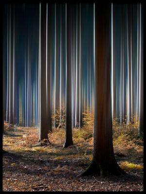 Art print titled Mystic Wood by the artist Carsten Meyerdierks