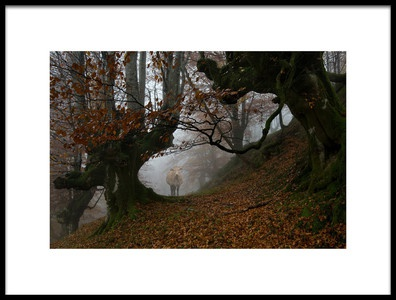Art print titled Natural Path by the artist Peru Serra