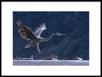 Buy this art print titled Near Miss Landing by the artist Purple Bamboo