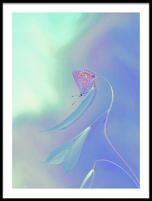 Art print titled New World by the artist Thierry Dufour