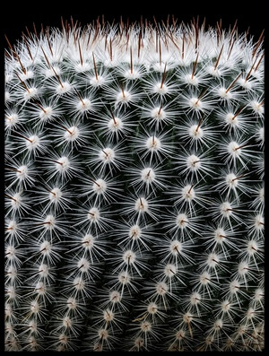 Art print titled Notocactus Scopa II by the artist Victor Mozqueda