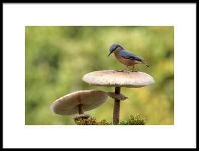 Art print titled Nuthatch In Autumn by the artist Nicolás Merino