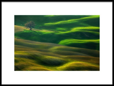 Buy this art print titled Oak by the artist Krzysztof Browko