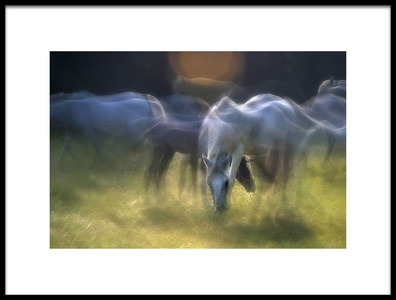 Art print titled On the Pasture by the artist milan malovrh