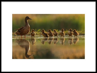 Art print titled One Big Happy Family by the artist Assaf Gavra