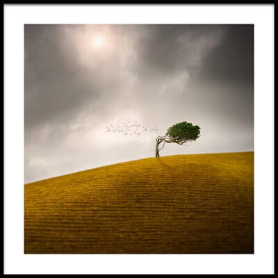 Buy this art print titled One Tree Hill by the artist Peter Elgar