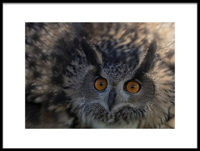 Buy this art print titled Owls Eye by the artist Purple Bamboo