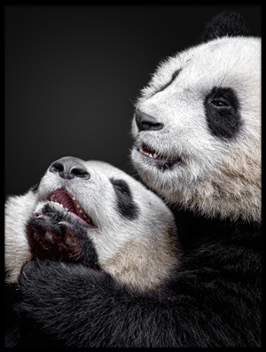Buy this art print titled Pandas by the artist Alessandro Catta
