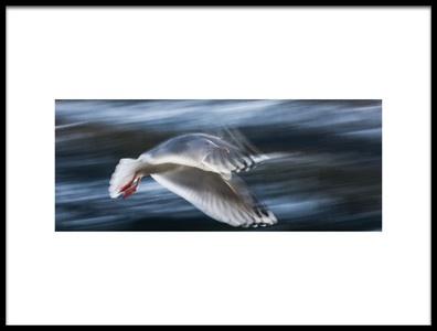 Art print titled Panning Gull by the artist bjørn lie fostad