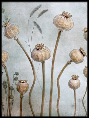 Buy this art print titled Papaver by the artist Mandy Disher
