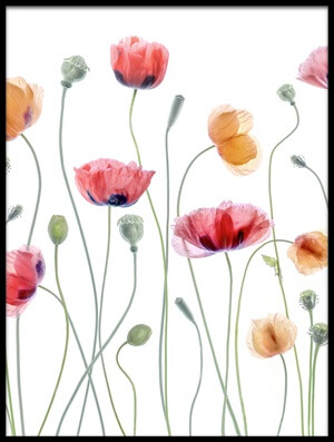 Buy this art print titled Papaver Party III by the artist Mandy Disher