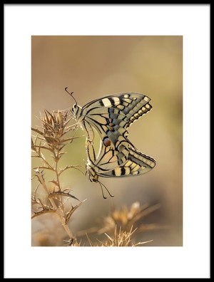 Art print titled Papilio by the artist samir. h