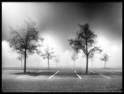 Art print titled Parking Tree by the artist Stefano Scappazzoni