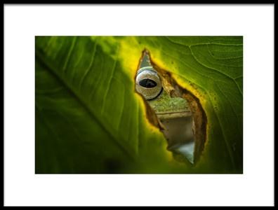 Art print titled Peeking Frog by the artist Fauzan Maududdin