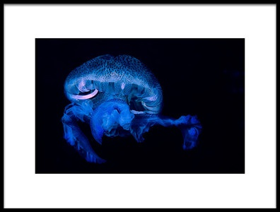 Art print titled Pelagia Noctiluca 2 by the artist Romano Molinari