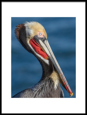 Art print titled Peli Portrait by the artist Greg Barsh