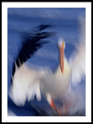 Buy this art print titled Pelican by the artist Qingsong Wang