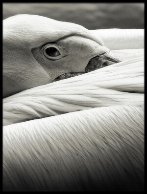 Art print titled Pelican by the artist Riccardo Berg