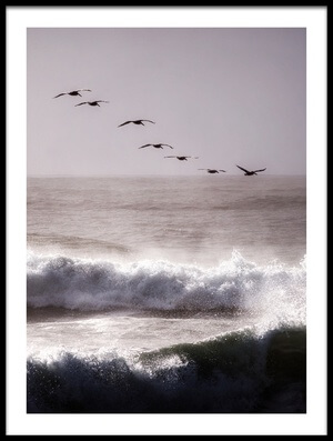 Art print titled Pelicans by the artist David Rothstein