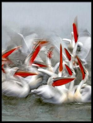 Art print titled Pelicans In Motion Blur by the artist Xavier Ortega