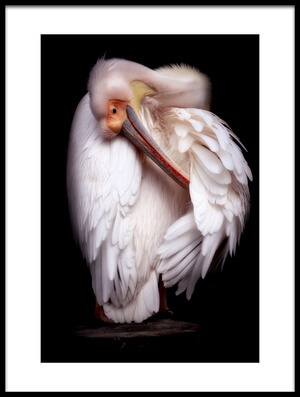 Buy this art print titled Pelican's Portrait by the artist Eiji Itoyama