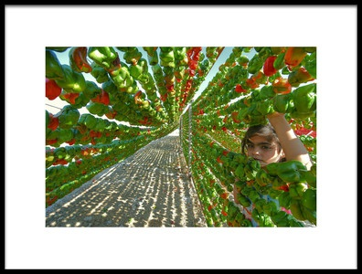 Art print titled Pepper Harvest by the artist Aylin Erozcan