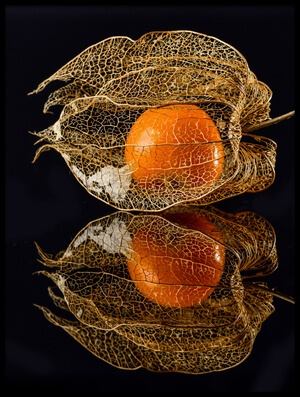 Art print titled Physalis by the artist Klaus Grosshanten