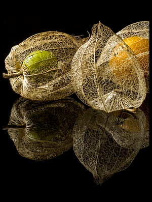 Buy this art print titled Physalis Alkekengi L by the artist gaberkosir