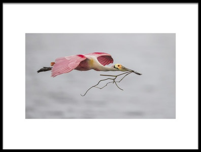 Art print titled Pink and Grey by the artist Greg Barsh