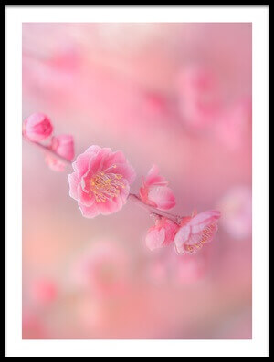 Buy this art print titled Pink Blossom by the artist Miyako Koumura