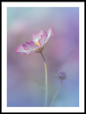 Art print titled Pink Elegance by the artist Miyako Koumura
