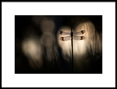 Art print titled Playing With Light by the artist Arjo van Dijk