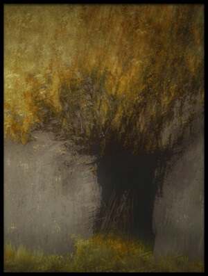 Art print titled Pollard Willow by the artist Nel Talen