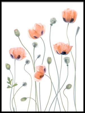 Buy this art print titled Poppies by the artist Mandy Disher
