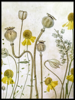 Art print titled Poppies and Helenium by the artist Mandy Disher