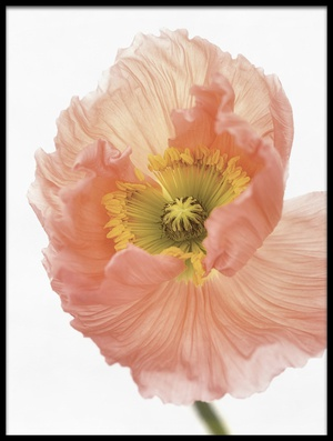 Buy this art print titled Poppy by the artist Lotte Grønkjær