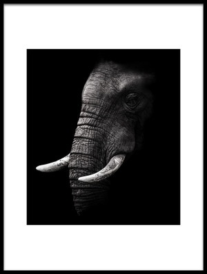 Buy this art print titled Portrait by the artist WildPhotoArt