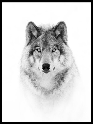 Art print titled Portrait of a Timber Wolf by the artist Jim Cumming