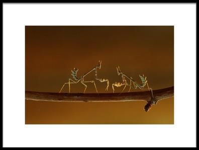Art print titled Predator Mantis by the artist ali akcelik